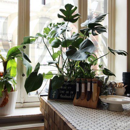 REFRESH – cantine durable & urbaine